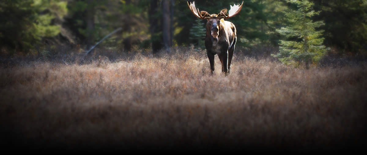 Klamath payment for Nh fish and game license